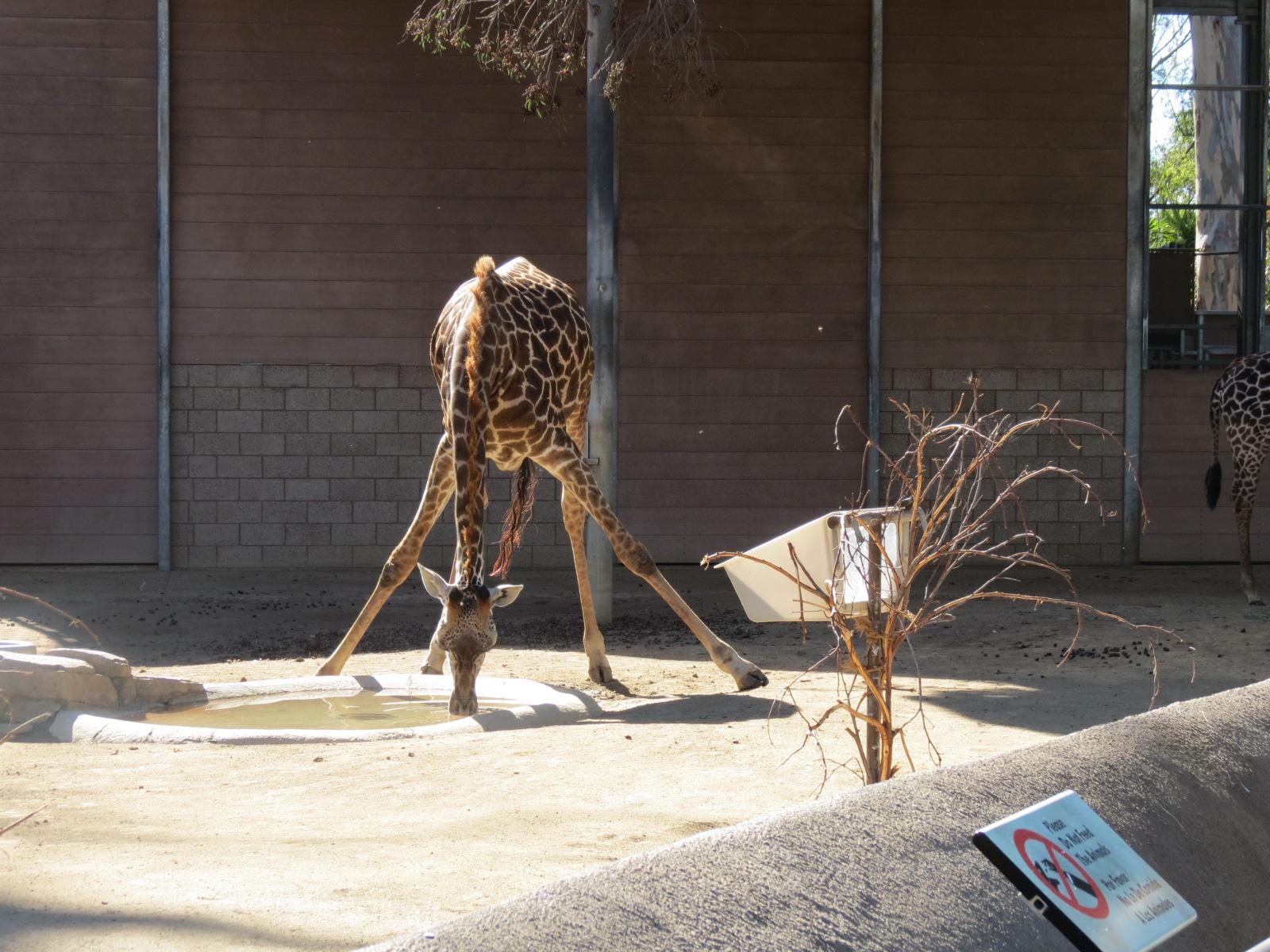 San Diego Zoo 082