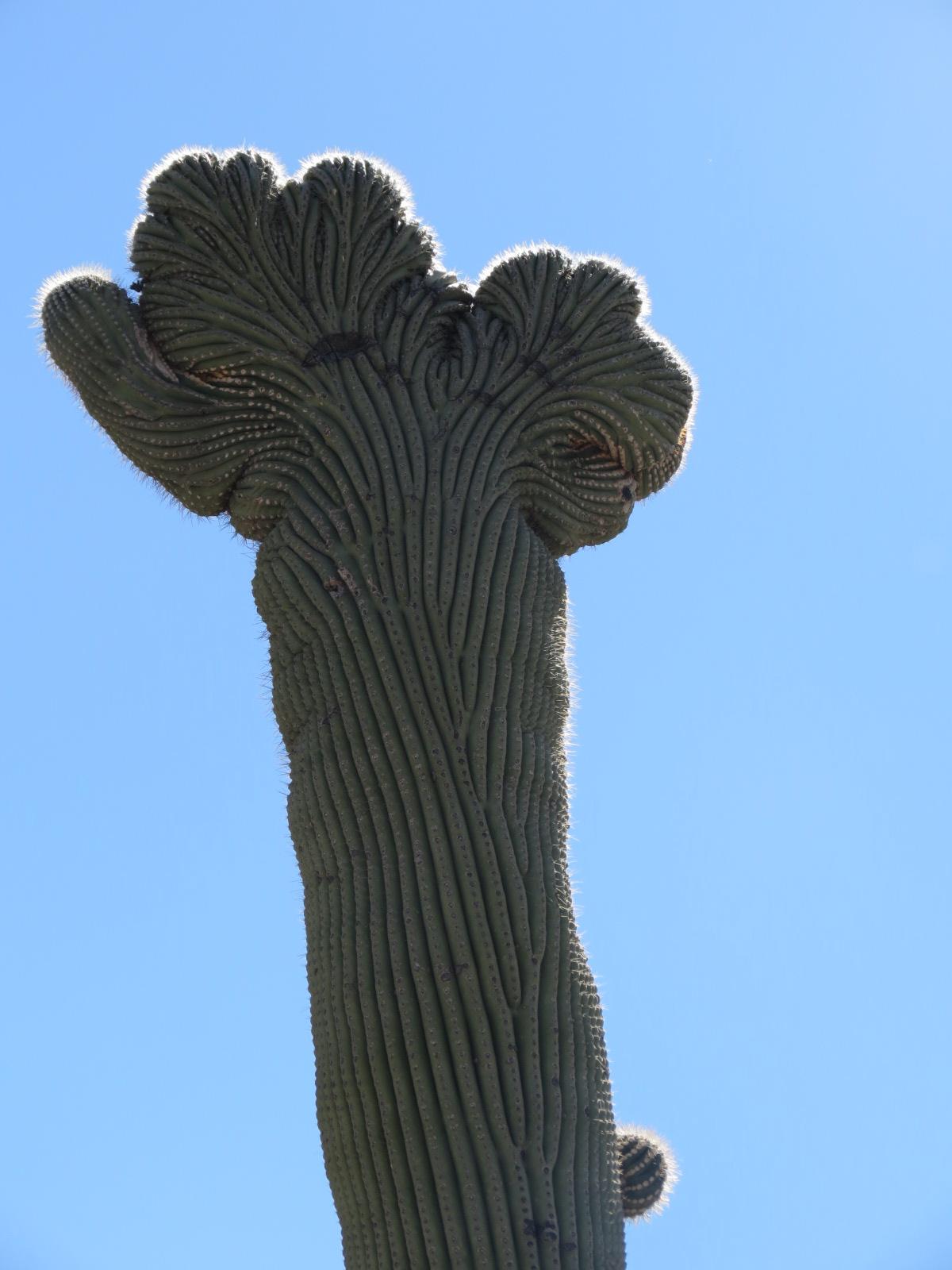 Tucson 1 018