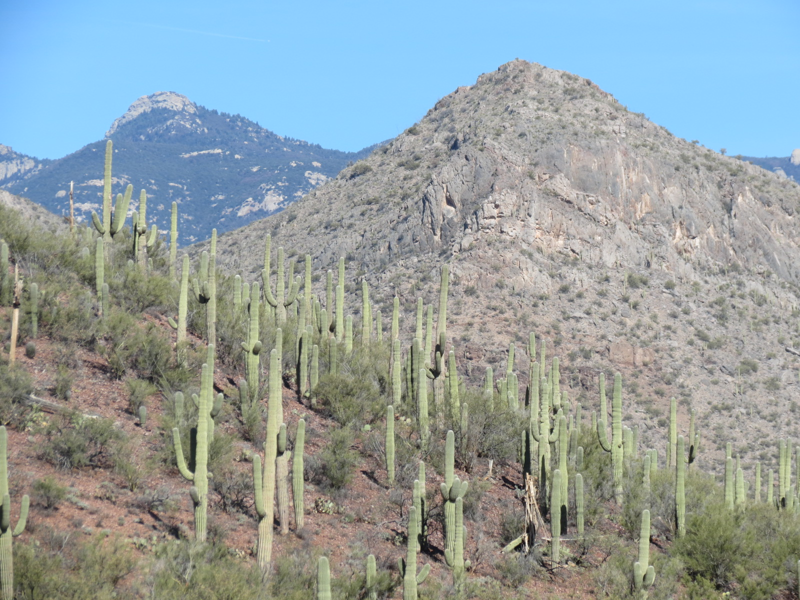 Saguaro National Park hillside