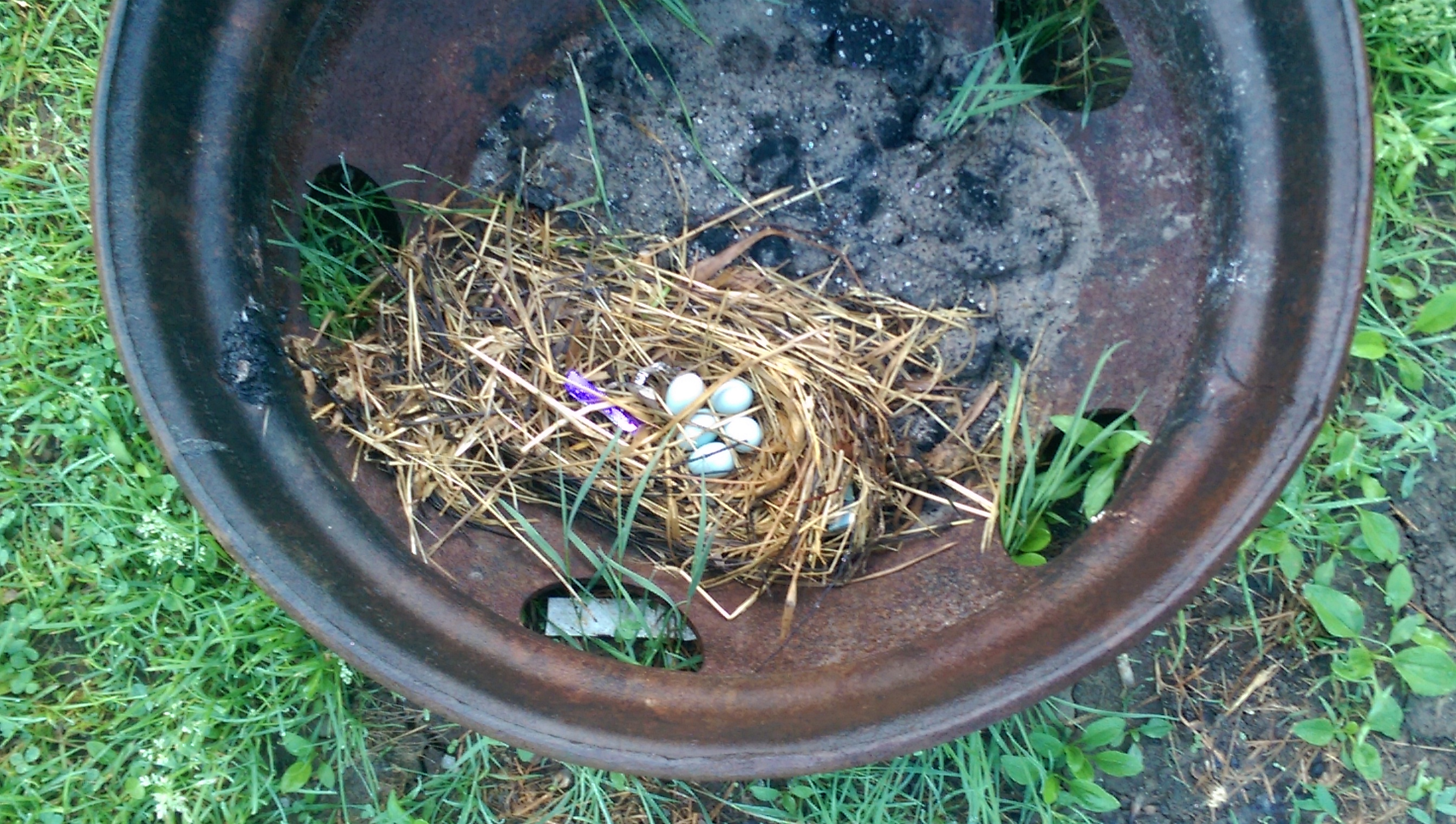 Birds Nest in our fire pit