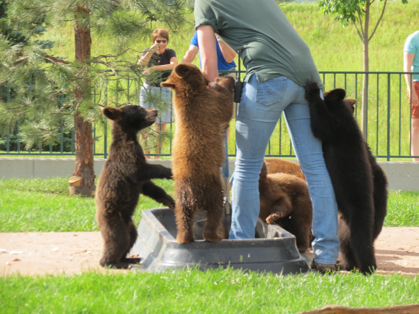 Baby cubs in Bear Country USA, Rapid City, SD