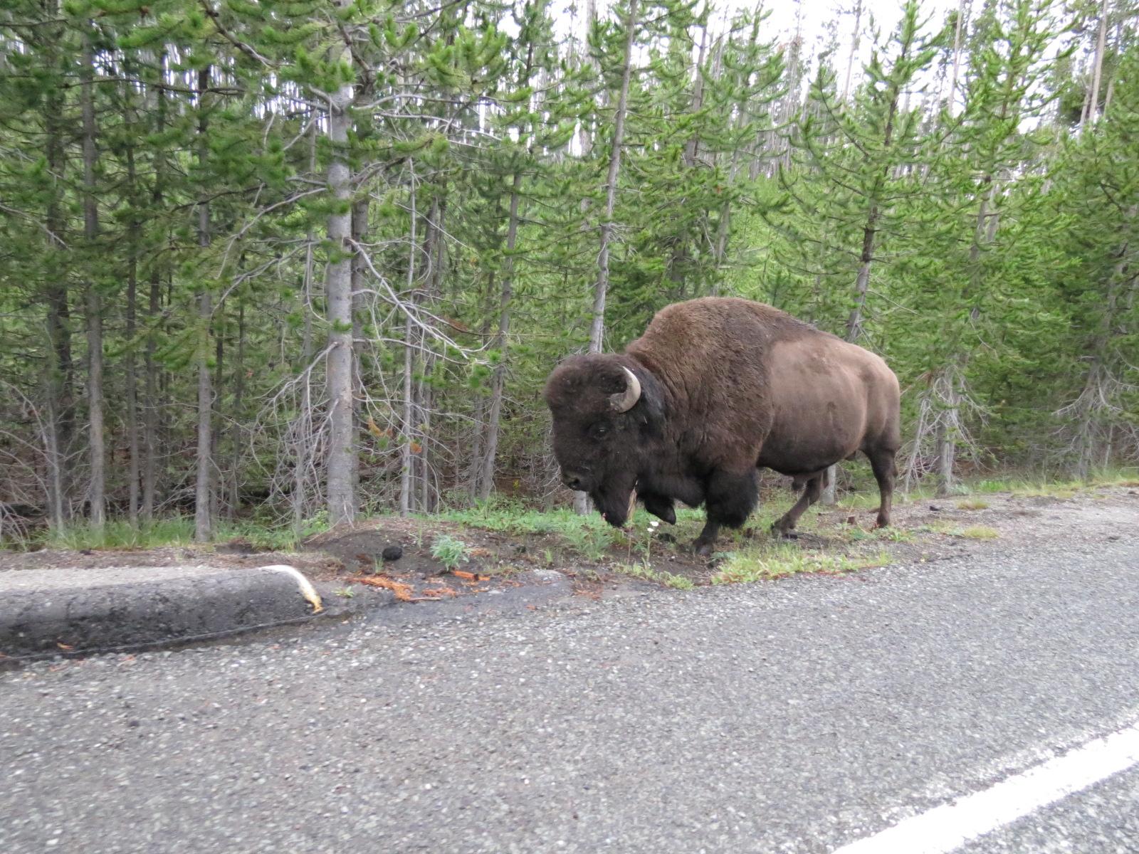 Traffic stopper buffalo