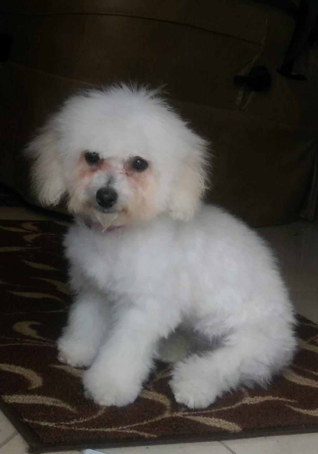 Gracie's first hair cut